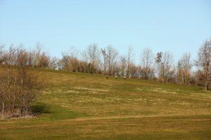 Golf og Gourmet Volstrup Golfcenter marts 2019 1